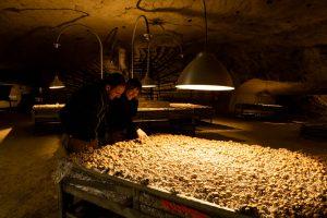 Musée à champignon SAUMUR